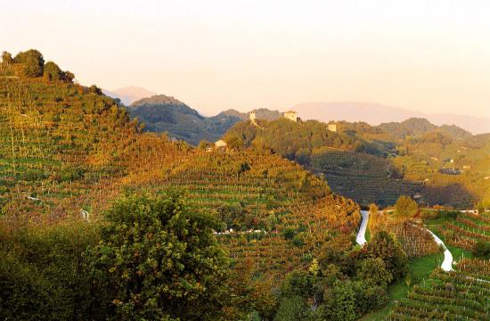 vitigno a Valdobbiadene